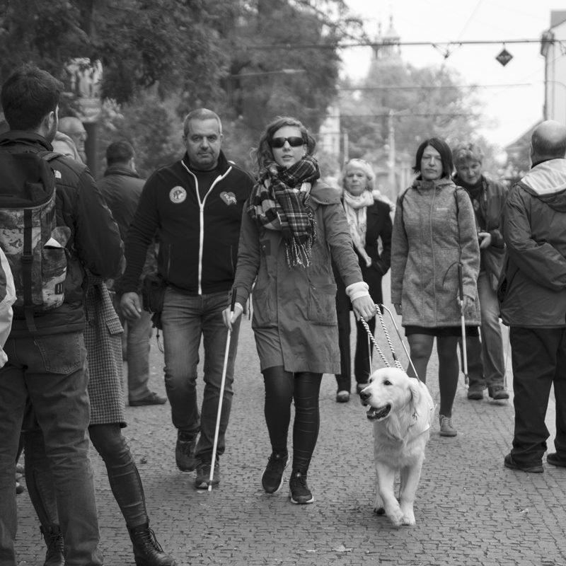 Pokud potkáš nevidomého svodicím psem