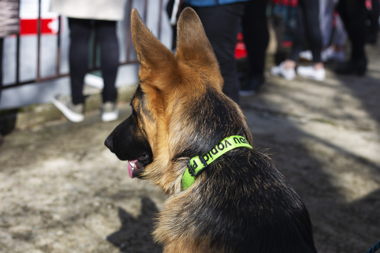 Pes s obojkem s nápisem Vodicí pes