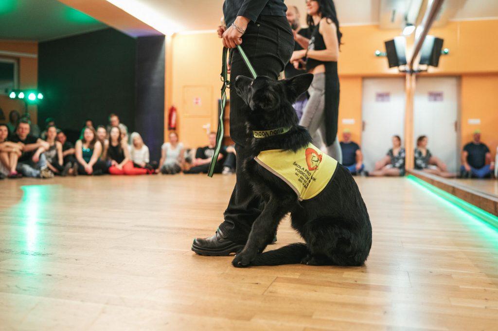 U nohy člověka sedí černé štěně v postroji pro vodicí psy. V pozadí se nad ním rozplývá skupinka lidí.